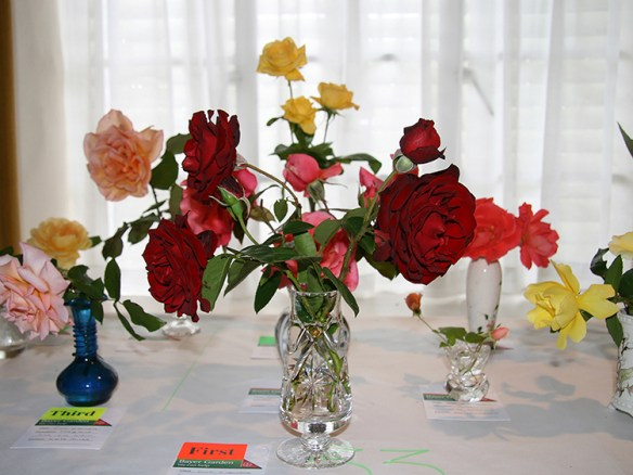 FIRST CLASS ROSES 02