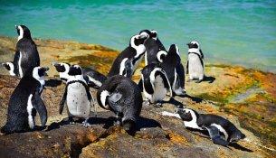Pinguini sudafrica