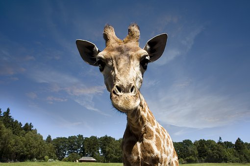 animali africa