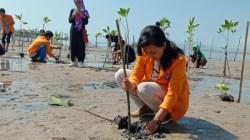 Mahasiswa KKN Tematik saat melakukan penanaman mangrove (Foto : Hasrul Tamrin/SULTRAKINI.COM)
