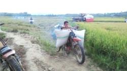 Bocah si buruh ojek gabah dari Kolaka Timur, Sultra.(Foto: Riswan/SULTRAKINI.COM)