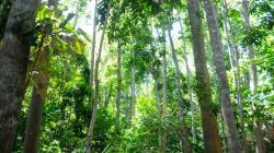 Hutan Lindung Warangga (Sumber: Mongabay. co. id)