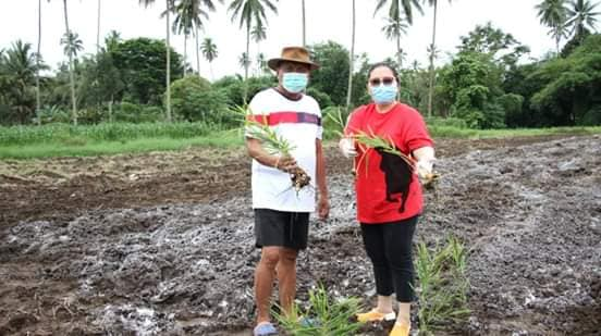 Gubernur Olly dan Ibu Rita Ajak Warga Tanam dan Konsumsi Jahe, Bisa Perkuat Imun Tubuh Lho!