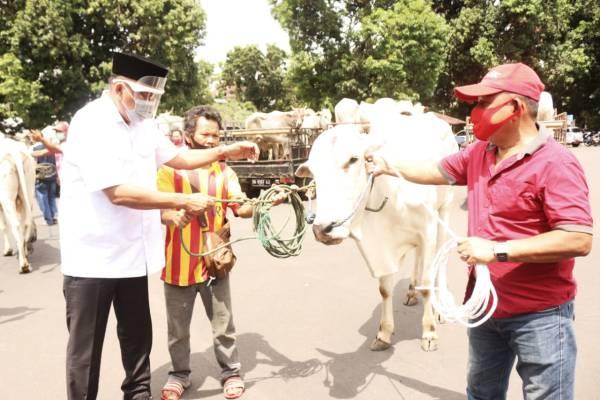 Sapi Qurban 247 Ekor Untuk Sulut, Gubernur Olly Imbau Warga Patuhi Protokol Kesehatan Covid-19
