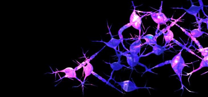 7 pilares para mantener unas neuronas sanas