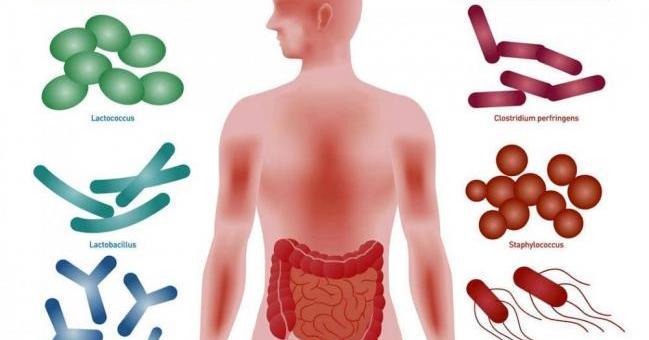 Pon en forma tus bacterias y gana Salud