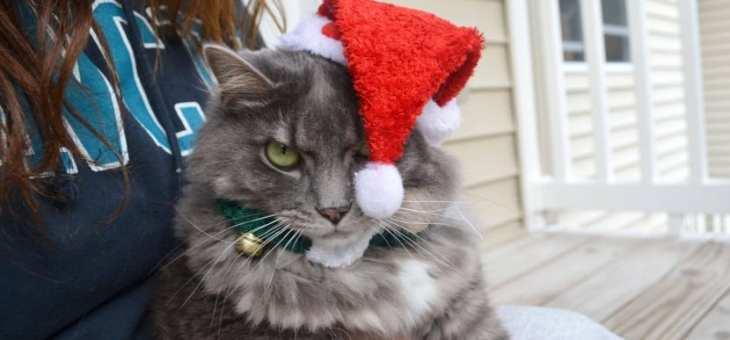 Obligaciones que te hacen odiar la Navidad