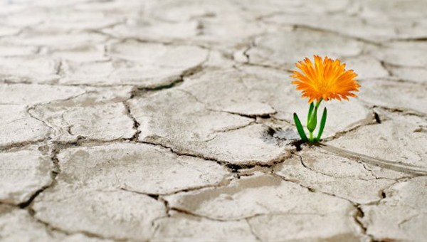 La neurobiología de la resiliencia