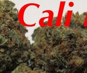 Buy Cali Kush online