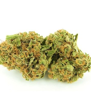 Buy Super Silver Haze onnline