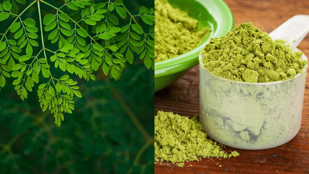 manfaat ekstrak daun kelor