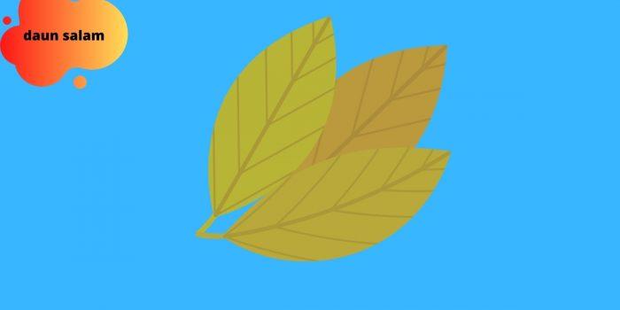 manfaat daun salam untuk kesehatan