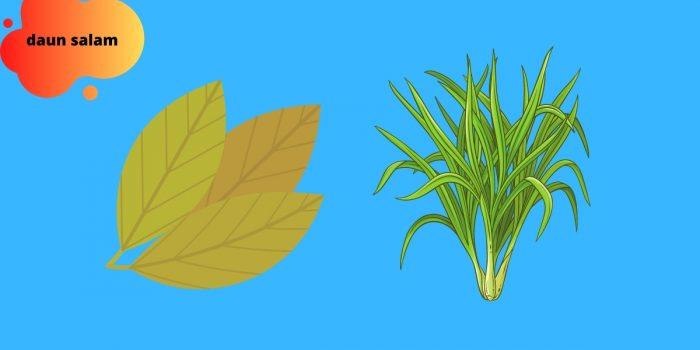 manfaat daun sereh dan salam