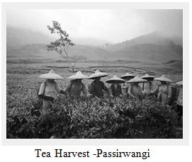 serak-la-storia-the-harvest