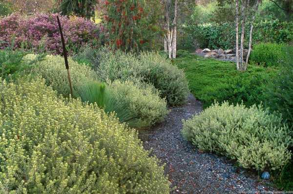 summer-dry garden