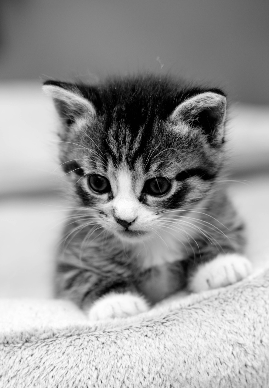 Black And White Cute Cats Wallpaper