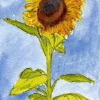 Charlie's Room: The Sunflower