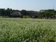 ソバ畑と見晴らしの里