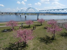 橋の向こうには東京湾が