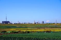 ネギ畑の向こうに見えるすかツリーと富士山