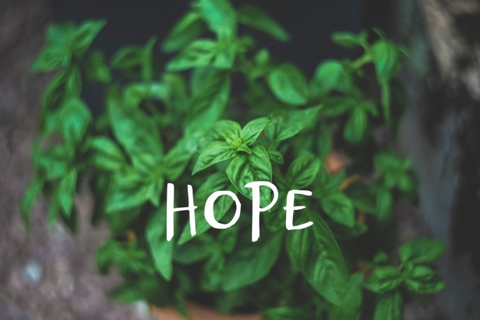 basil plant with text, HOPE