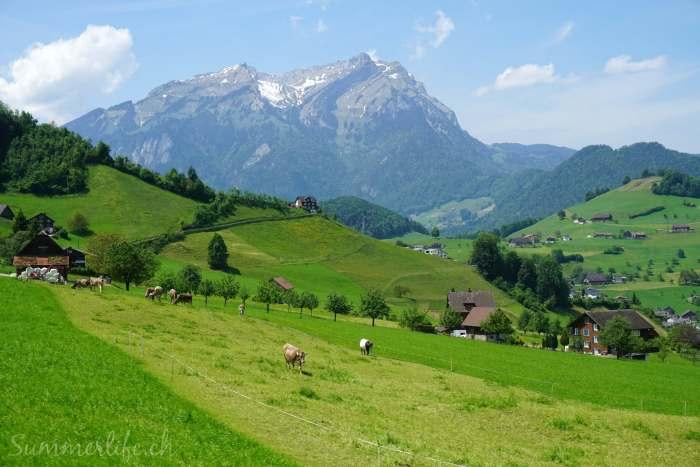 Grüne Landschaft Stans