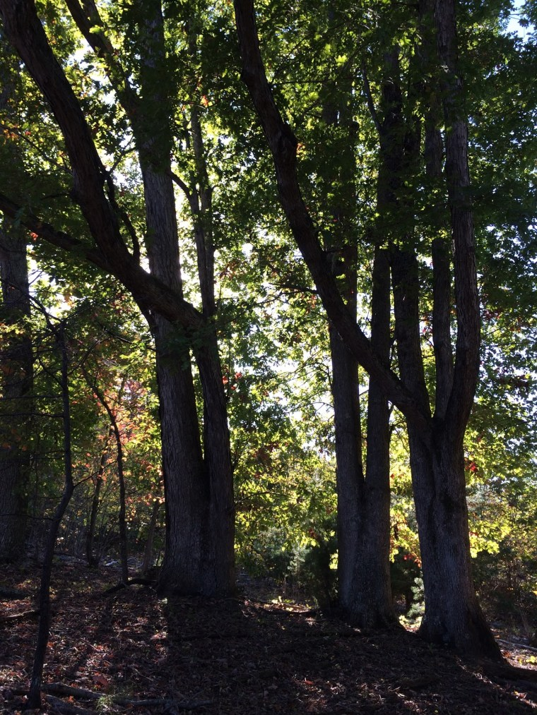 A Few Trees in the Woods on Our Farm