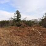 Bulldozing the land