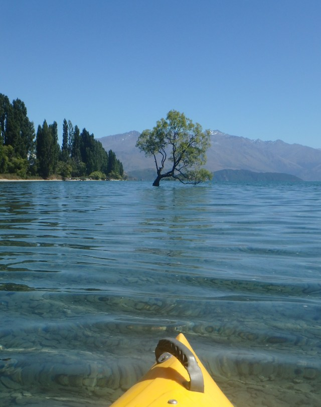 Wanaka, Lake Wanaka, #ThatWanakaTree