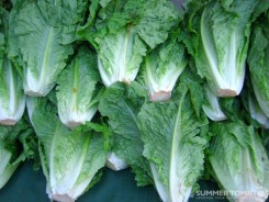 Romaine Lettuces
