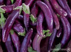 Baby Eggplants