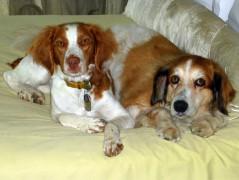 Sheba and Bella