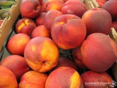 Summer Fire Nectarines