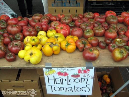 Tomatero Organic Tomatoes