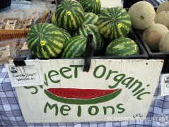 Sweet Organic Melons