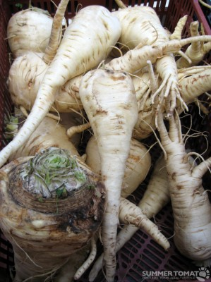 Giant Parsnips