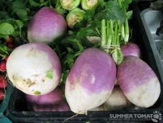 Giant Turnips