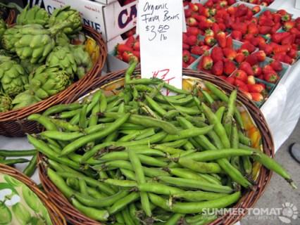 First Fava Beans