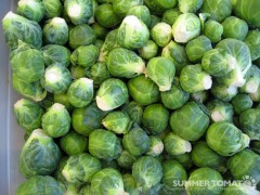 First Brussels Sprouts