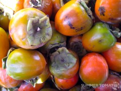 First Persimmons