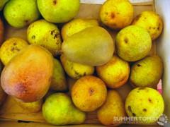 Warren Pears