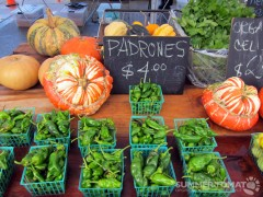 Pumpkins and Padrons