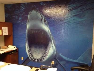 shark vinyl