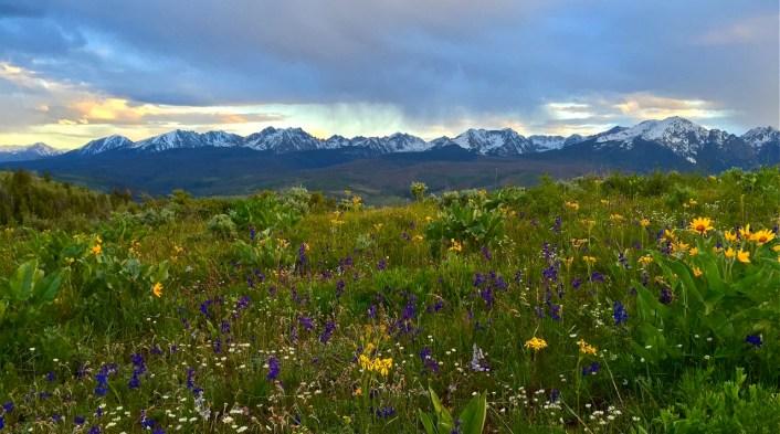 Wildflower skyline.