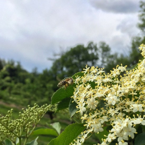 Pollination!