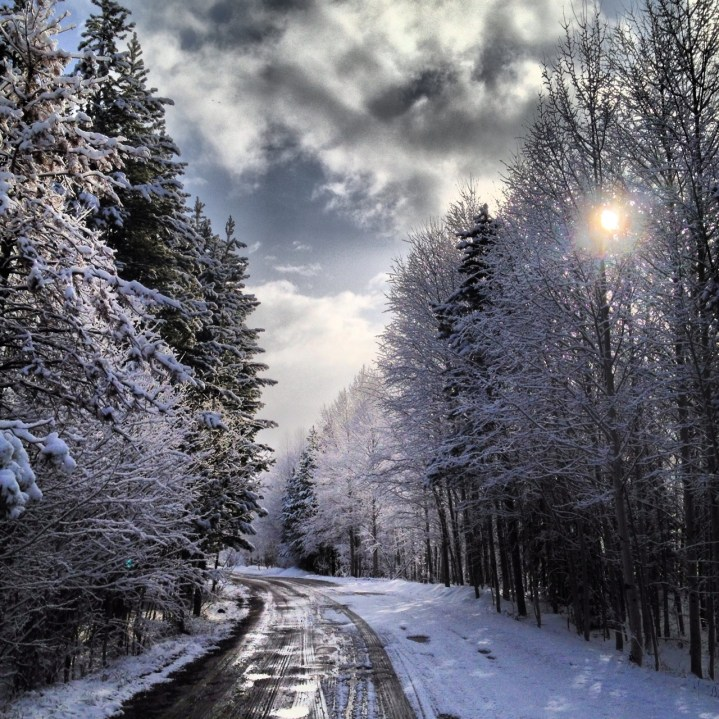 Winter dawn along a forest road in Colroado.
