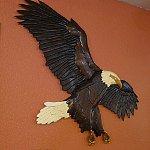 bald-eagle-thumb