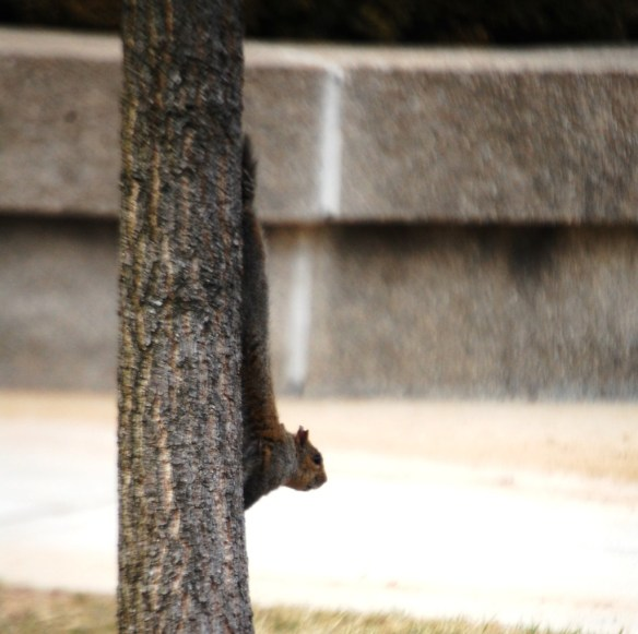 A squirrel hangs on a tree