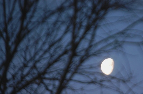 This is a shot of the moon in the morning after the sun came up in Lexington