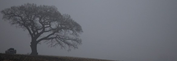 Tree in Fog taken on a back road in Missouri
